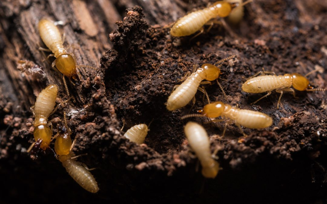 4 Ways to Prevent Termites